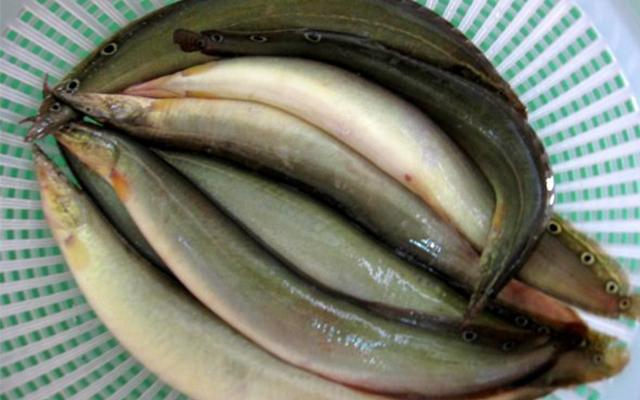 Cá chạch- món ăn rất tốt cho sức khỏe sinh lý nam